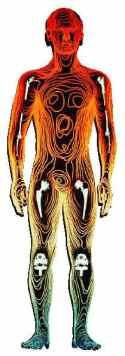elementi corpo umano