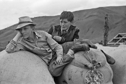 Boys on sacks of wool, Malheur County, Oregon, 1941; Russell Lee
